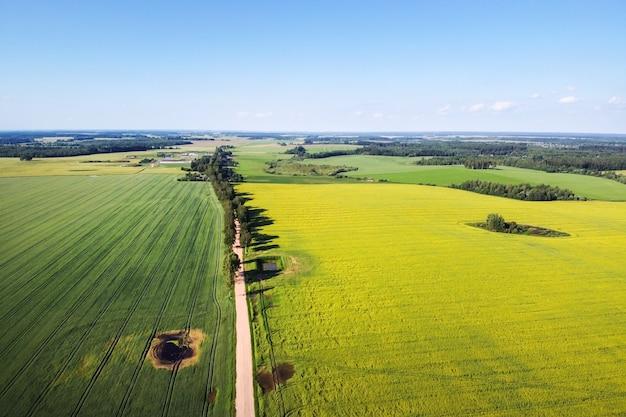 Strada e campo di colza in fiore, fiori di colza gialli, terreni agricoli, veduta aerea