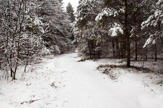 La strada coperta di neve in una stagione invernale
