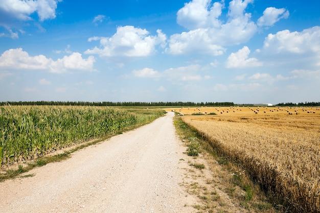 Strada in un campo strada di campagna asfaltata, passando attraverso un campo agricolo