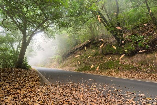 Strada nella foresta, foglie che cadono e mistico, anaga, tenerife, isole canarie, spagna.