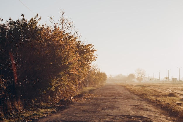 La strada che conduce attraverso la campagna. mattina presto soleggiata. vista dall'auto.