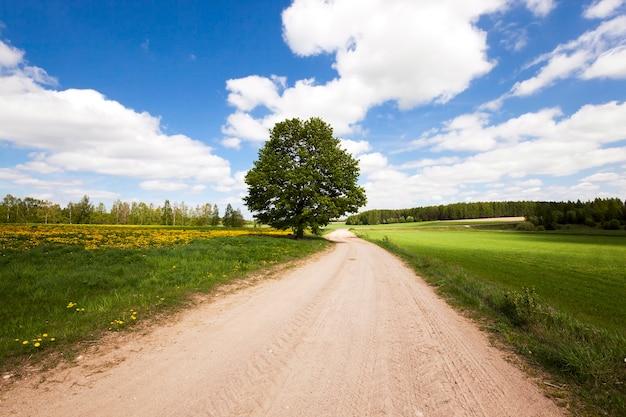 Strada, situata in campagna in primavera