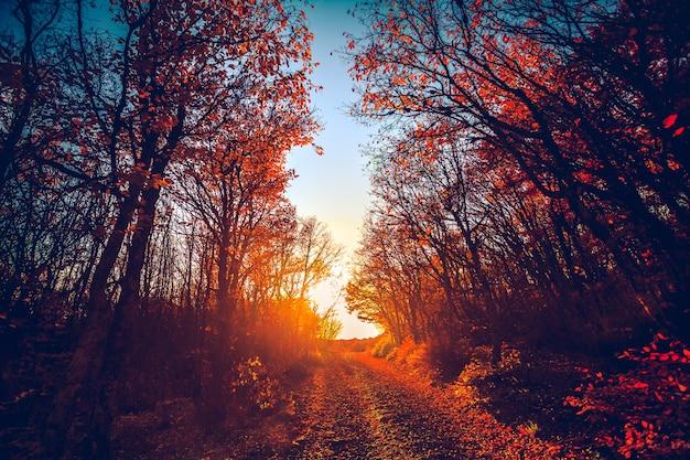 Strada nella maestosa foresta colorata al tramonto rosso foglie autunnali carpazi ucraina europa