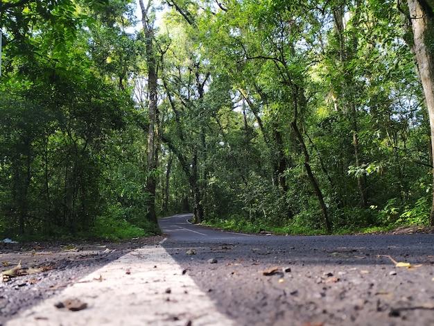 Strada in mezzo agli alberi nella foresta