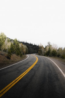 Strada per una foresta nebbiosa