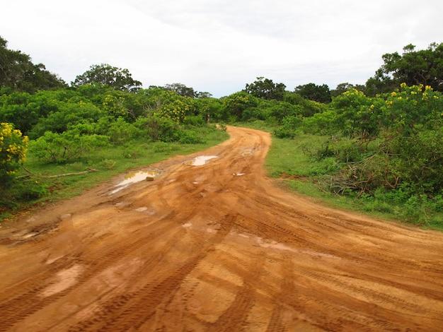 La strada del safari nel parco nazionale di yala, sri lanka