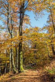 Strada disseminata di foglie nella bellissima foresta di autunno