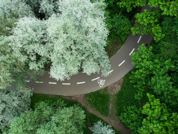 Strada attraverso la foresta verde estiva, vista aerea