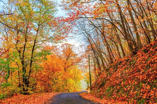 Strada con alberi in una giornata di sole in autunno