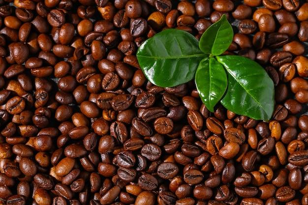 Chicchi di caffè marroni arrostiti su uno sfondo grigio