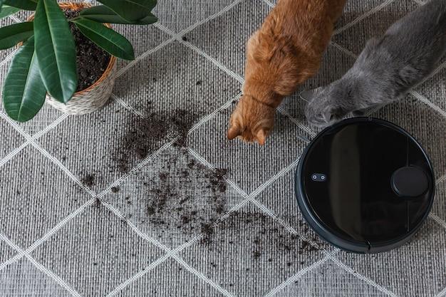 Robot aspirapolvere pulizia tappeto sporco e gatto a casa accanto alla pianta