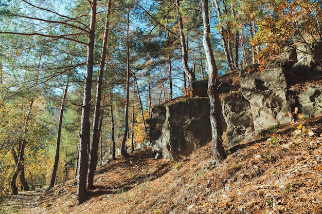 La roccia nella foresta d'autunno al mattino presto