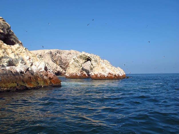 Rocce con animali nell'oceano pacifico, paracas, perù