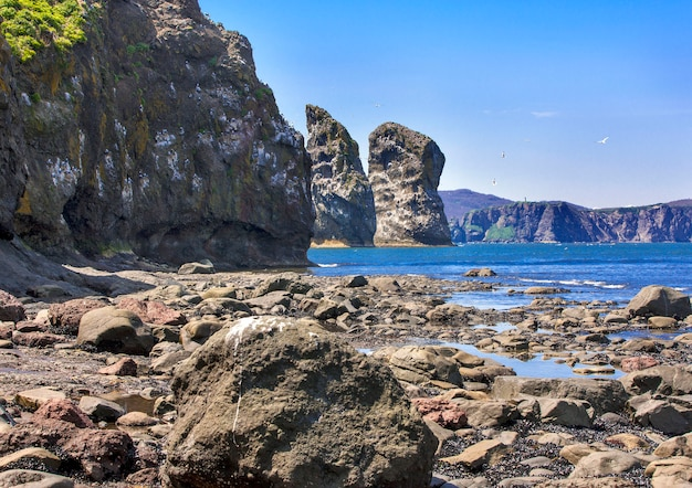 Rocce con gabbiani e fondali marini con la bassa marea,
