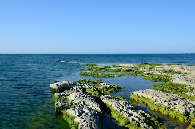 Costa rocciosa del mar caspio ricoperta di alghe in estate