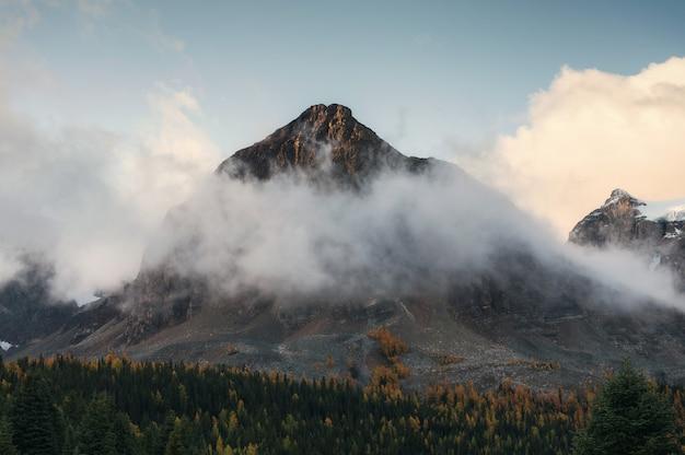 Montagne rocciose con nebbia nella foresta di autunno a assiniboine provincial park