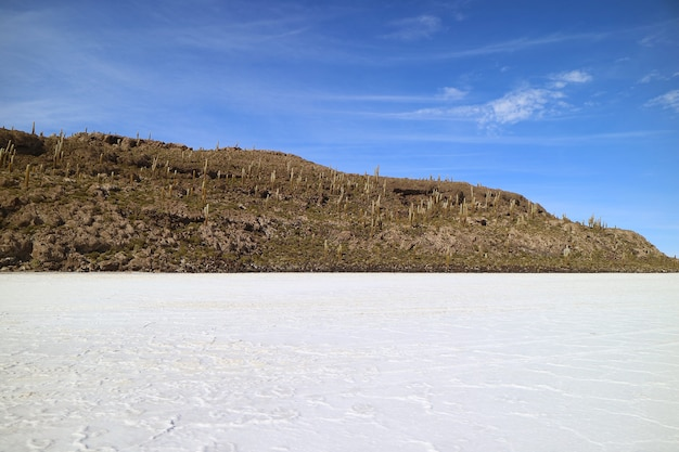 Affioramento roccioso sulle saline di uyuni kmown come isla del pescado con innumerevoli cactus giganti, bolivia