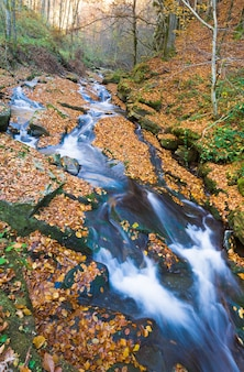 Ruscello roccioso, che attraversa la foresta di montagna autunnale