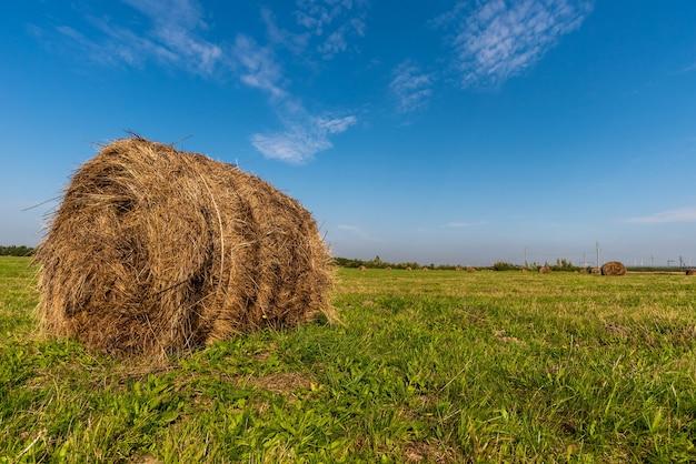 Rotoli di fieno si trovano su un tempo di raccolta del grano campo agricolo