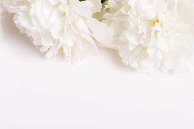 Insegna romantica, primo piano delicato dei fiori delle peonie bianche. petali rosa profumati, sfondo romantico astratto, carta di fiori pastello e morbidi