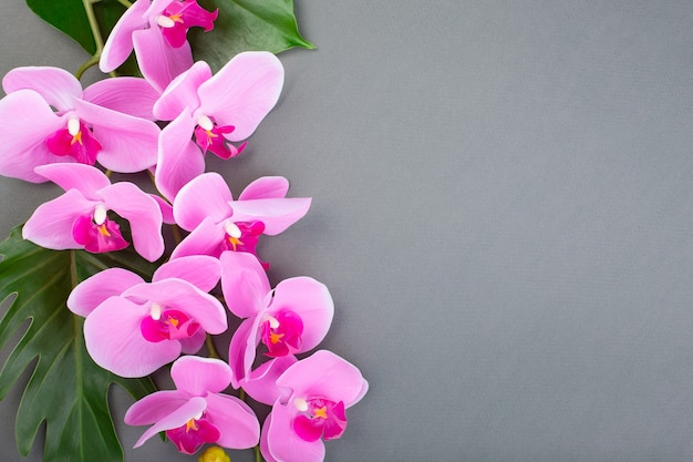 Romantico ramo di orchidea rosa su sfondo grigio.