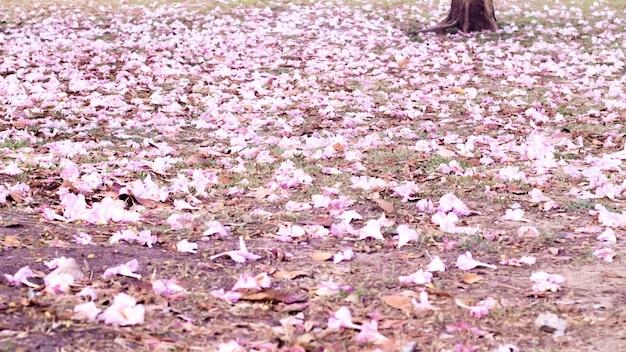 Romantico fiore di ciliegio sullo sfondo della natura nella stagione primaverile. tono rosa. petalo. fiore a terra. ambiente e concetto di stagione