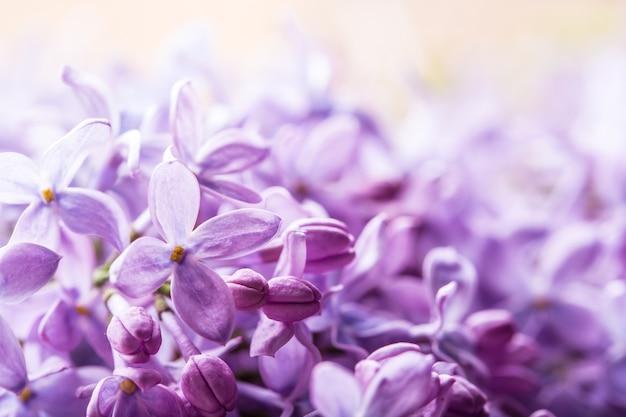 Sfondo floreale romantico con fiori lilla viola o viola.
