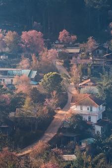Rong kla village e sakura tree all'alba nel parco nazionale di phu hin rong kla, provincia di phitsanulok, thailandia