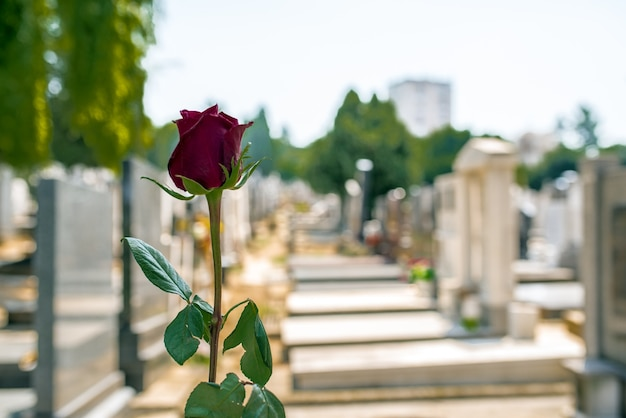 Rose in un cimitero con lapide