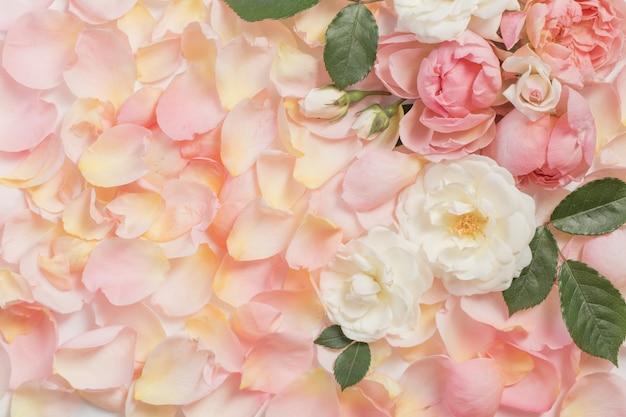 Sfondo di fiori e petali di rosa