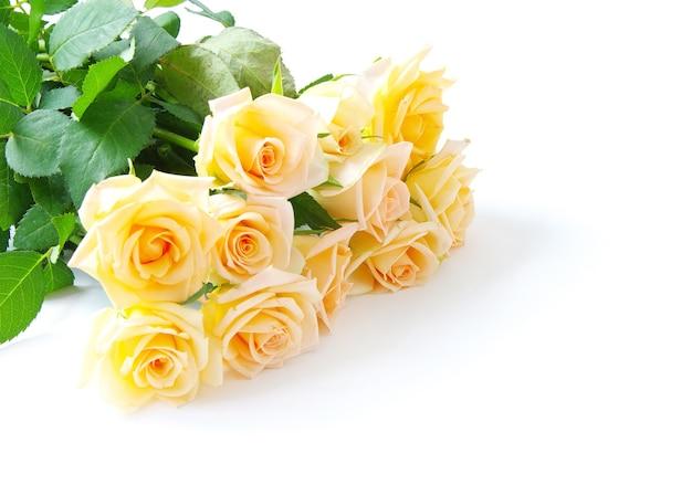 Rose isolati su sfondo bianco