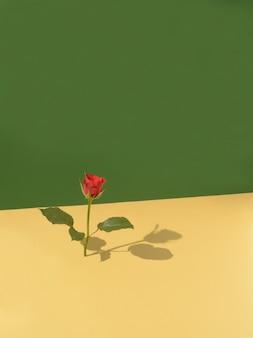 Una rosa con ombra in piedi su uno sfondo verticale colore verde sullo sfondo