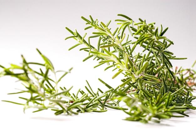 Erba aromatica al rosmarino molto usata in cucina in brasile e nella regione mediterranea utilizzata anche in...