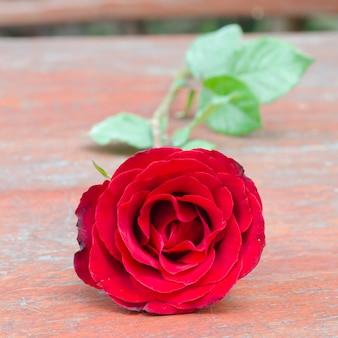 Rose e regali in occasione del san valentino.