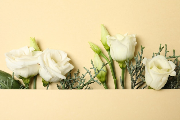 Rose e rami di thuja su sfondo beige, spazio per il testo
