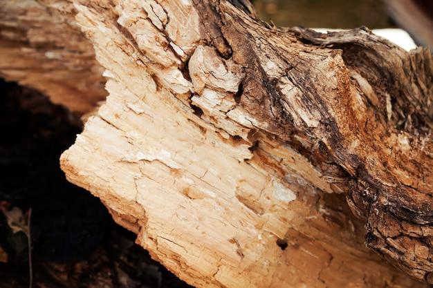 Struttura di legno marcio. primo piano dell'albero marcio e dei suoi frammenti marci.