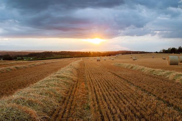 Balle rotonde di paglia su terreni agricoli contro un cielo nuvoloso blu. campo falciato dopo la mietitura del grano.