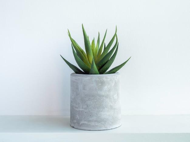 Vaso rotondo in cemento con pianta succulenta verde su ripiano in legno bianco isolato su parete bianca. piccola fioriera in cemento fai da te per cactus, piante grasse o fiori.