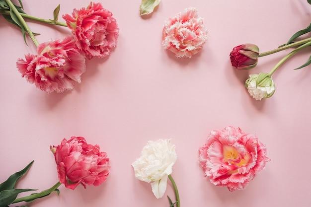 Cornice rotonda fatta di bellissimi fiori di tulipano peonia rosa e bianca sul rosa. vista piana laico e dall'alto