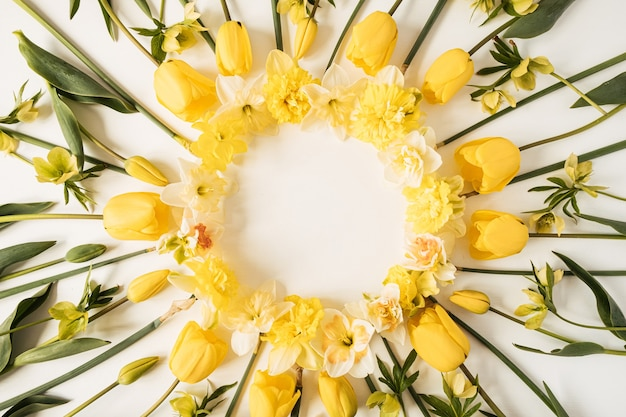Ghirlanda cornice rotonda fatta di narciso giallo e fiori di tulipano su bianco