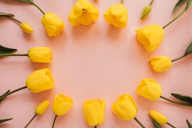 Ghirlanda di cornice rotonda con spazio vuoto della copia fatto di fiori di tulipano giallo sul rosa. vista piana laico e dall'alto