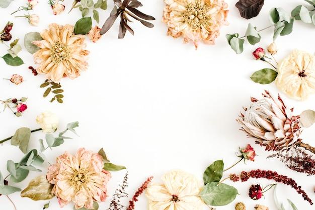 Corona a cornice rotonda con fiori secchi: peonia beige, protea, rami di eucalipto, rose su fondo bianco. disposizione piana, vista dall'alto. sfondo floreale