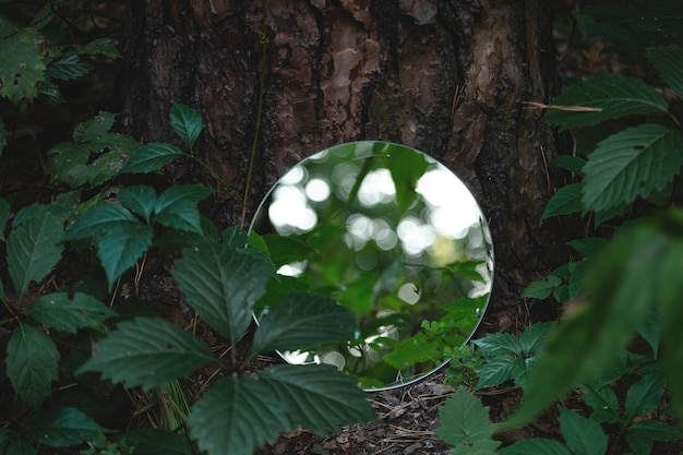 Specchio rotondo nell'immagine d'avanguardia dell'estratto della foresta verde scuro vicino al concetto della natura