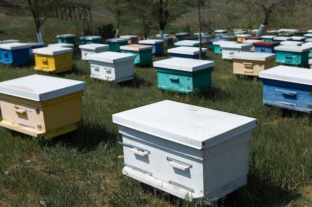 Una fila di alveari in un apiario privato in giardino. industria del miele.