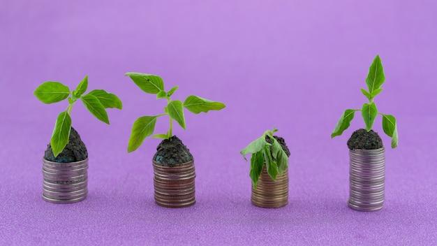 Fila di monete con la pianta verde appassisce e prende vita pianta che cresce su monete di denaro business gr