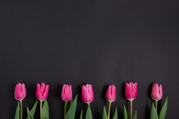 Fila di tulipani rosa su fondo nero