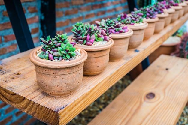 La fila di piccolo albero in bello vaso decora sullo scaffale di legno con il muro di mattoni marrone