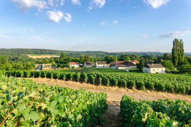 Fila l'uva della vite nelle vigne dello champagne al fondo del villaggio della campagna di montagne de reims, reims, francia