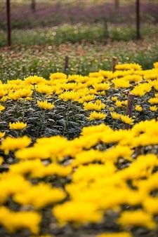 Righe di fiori tropicali colorati in giardino fiorito, concetto di pianta floreale da vendere.