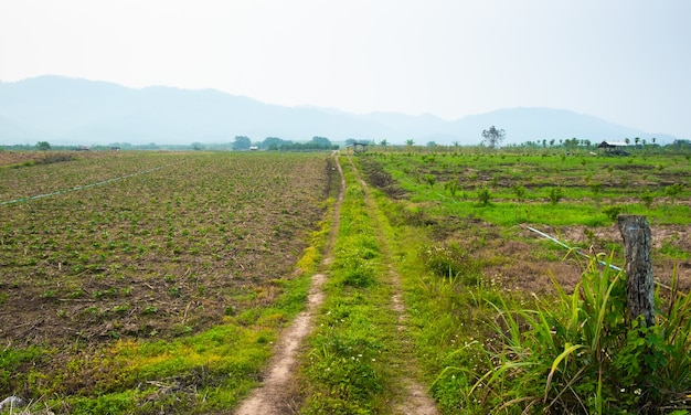 Strada sterrata rurale ed erba su entrambi i lati della strada. percorso nei campi rurali.